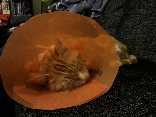 asleep with the orange cone
